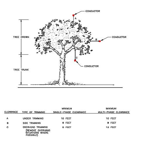 An illustration of a tree labeled with different items and terms